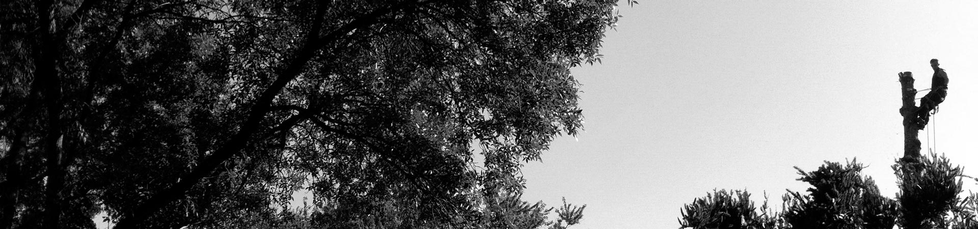 monster-tree-service-4-bw